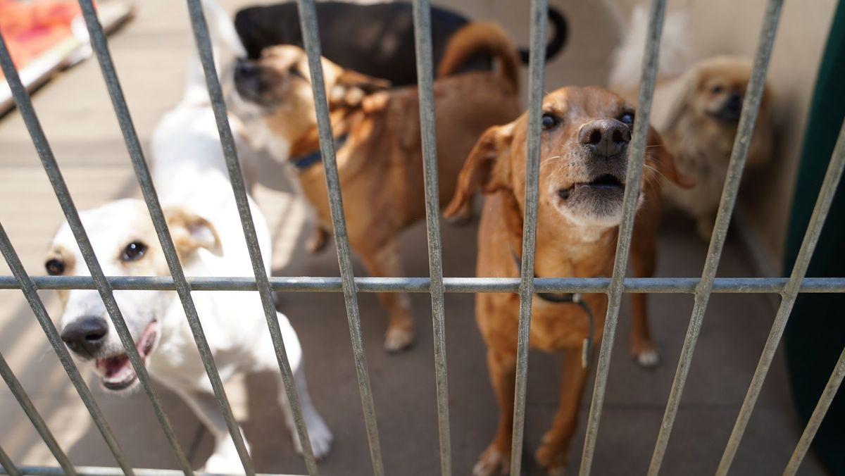 Hunde im Gruppengehege eines Tierheims
