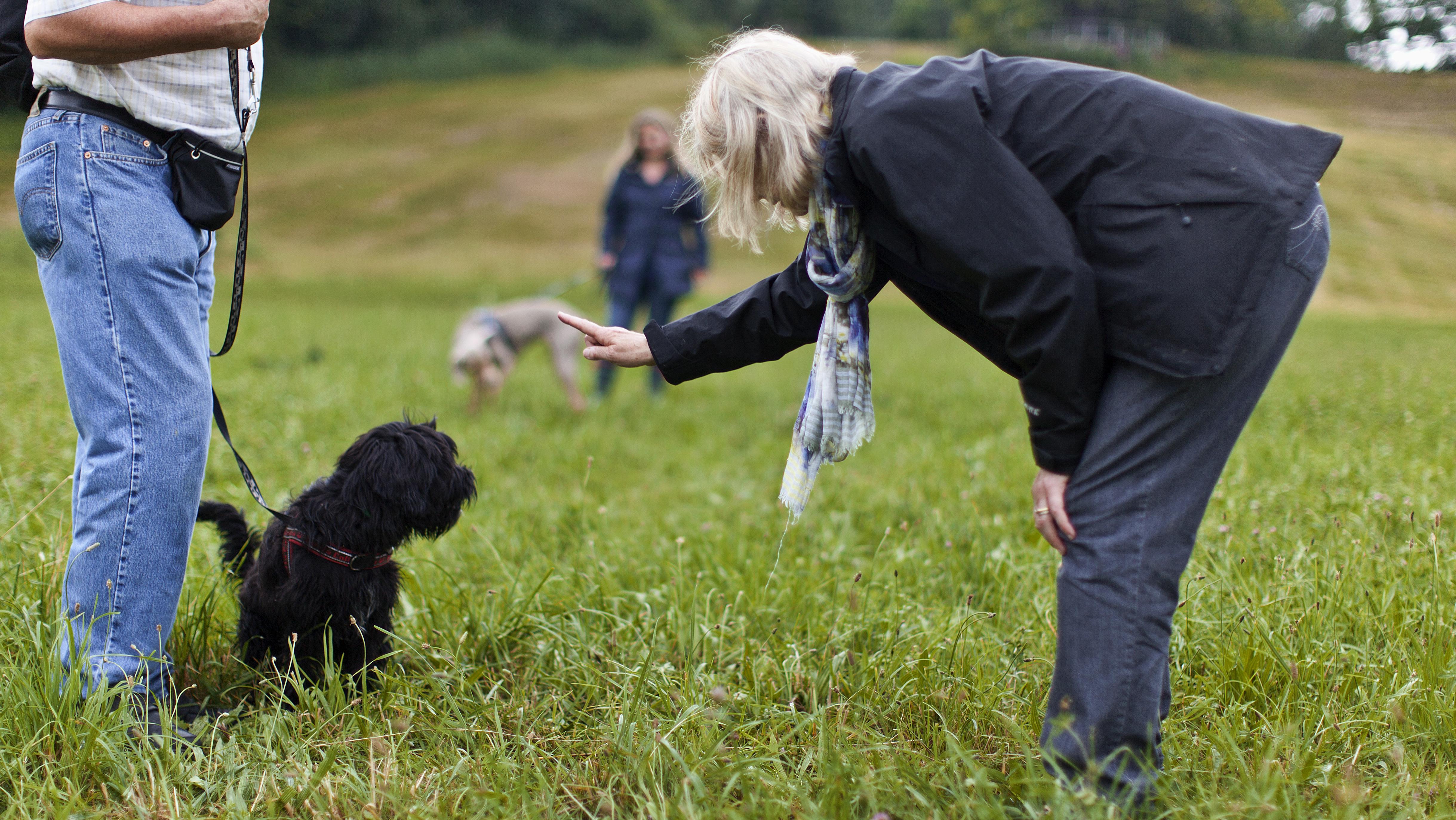 Frau bei Hundeerziehung