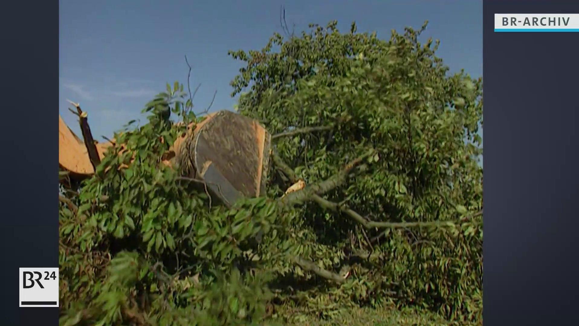 Ein Bagger fällt einen Obstbaum
