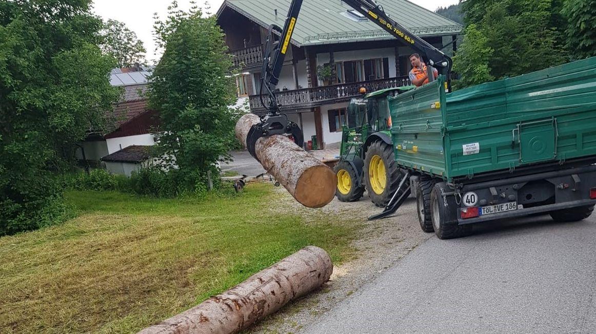 Baumstämme werden von einem Laster an den Straßenrand abgeladen
