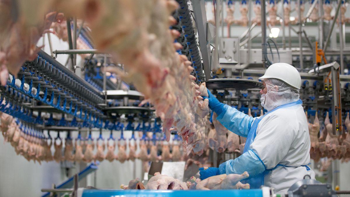 Fleischschlachtungsbetriebe haben sich als Infektionsherde für das Coronavirus entpuppt.