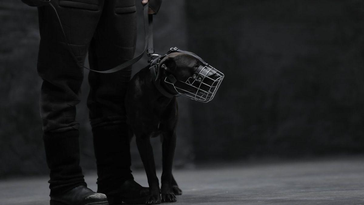 Schwarzer Hund an einer Leine mit Maulkorb