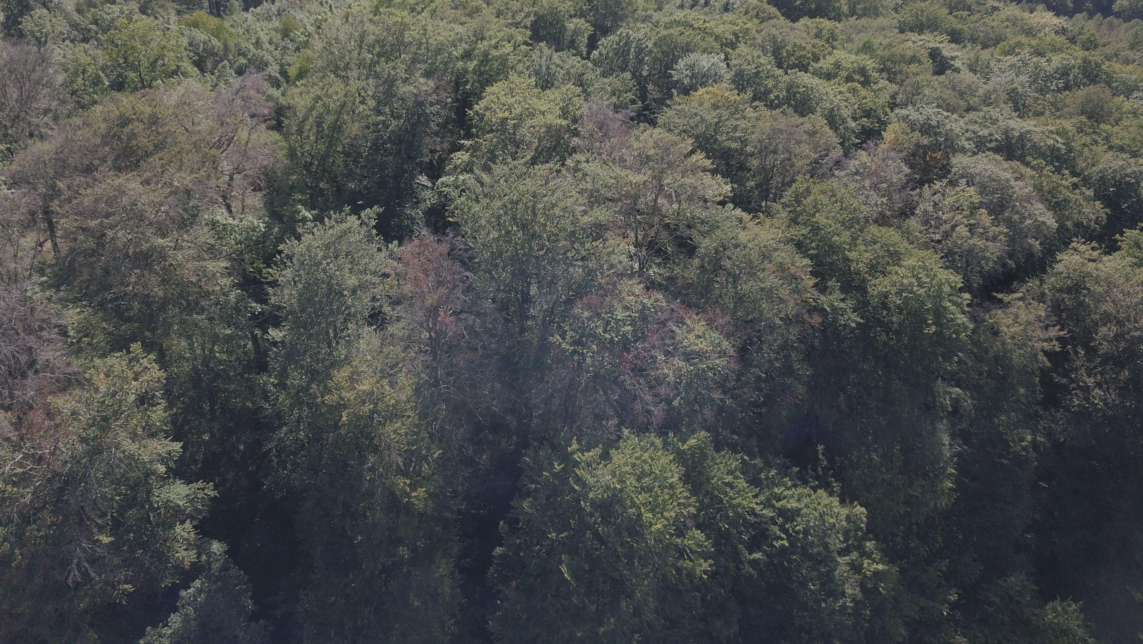 Kaputte Buchen in einem Wald in Unterfranken
