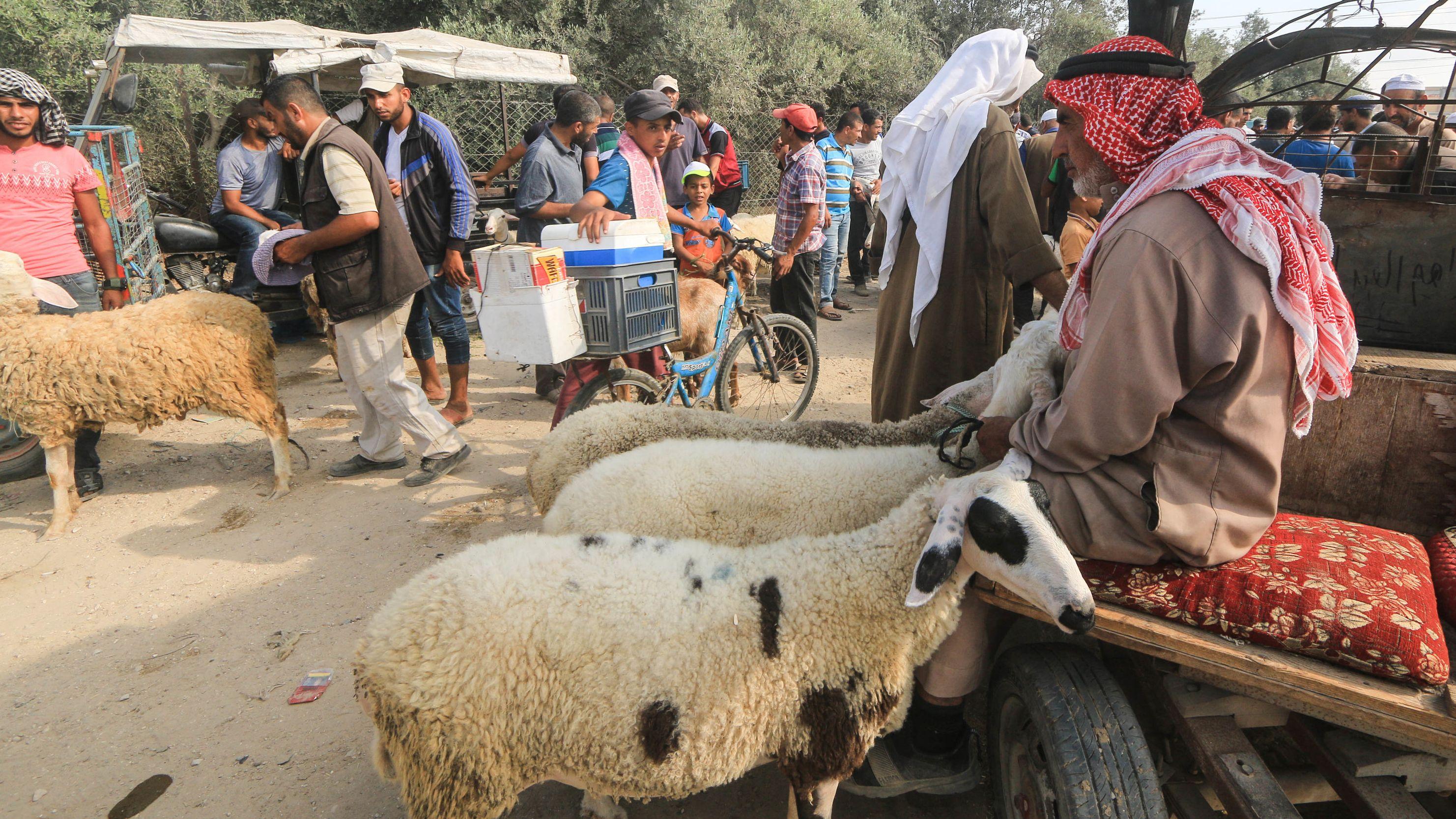 Vorbereitungen zum islamischen Opferfest im palästinensischen Autonomiegebiet