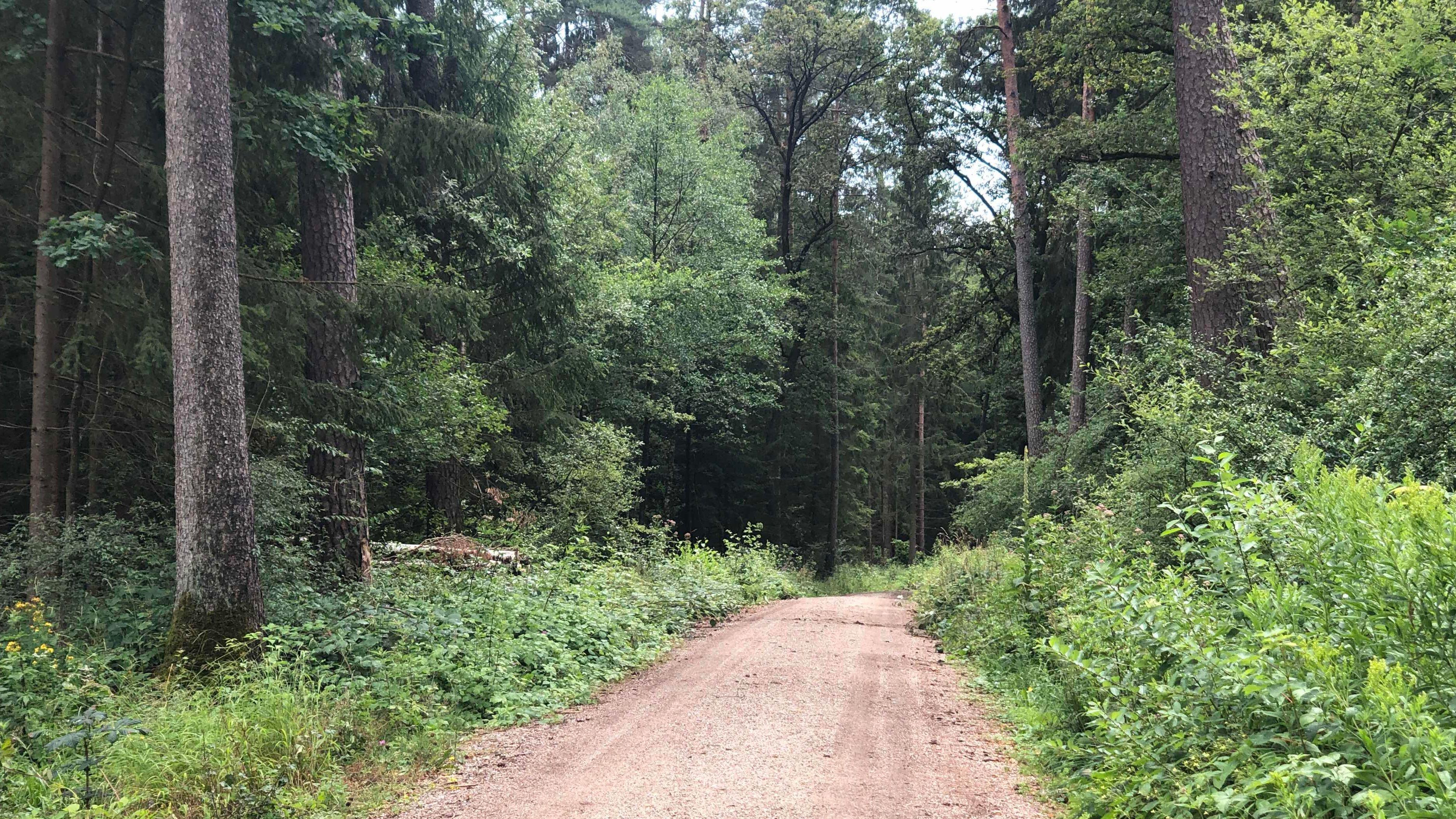 Waldweg bei Lauf an der Pegnitz. Hier in der Nähe hat ein Pilzsammler am Morgen des 14.07 eine Männerleiche gefunden