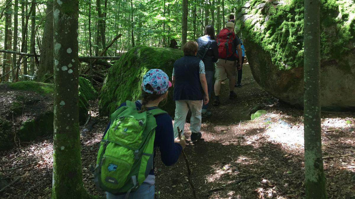 Bei geführten Wanderungen kann man den Bayerwald erkunden