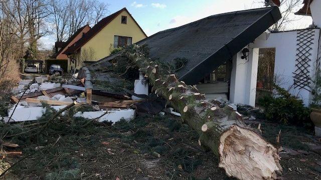 Baum liegt auf zerstörtem Haus