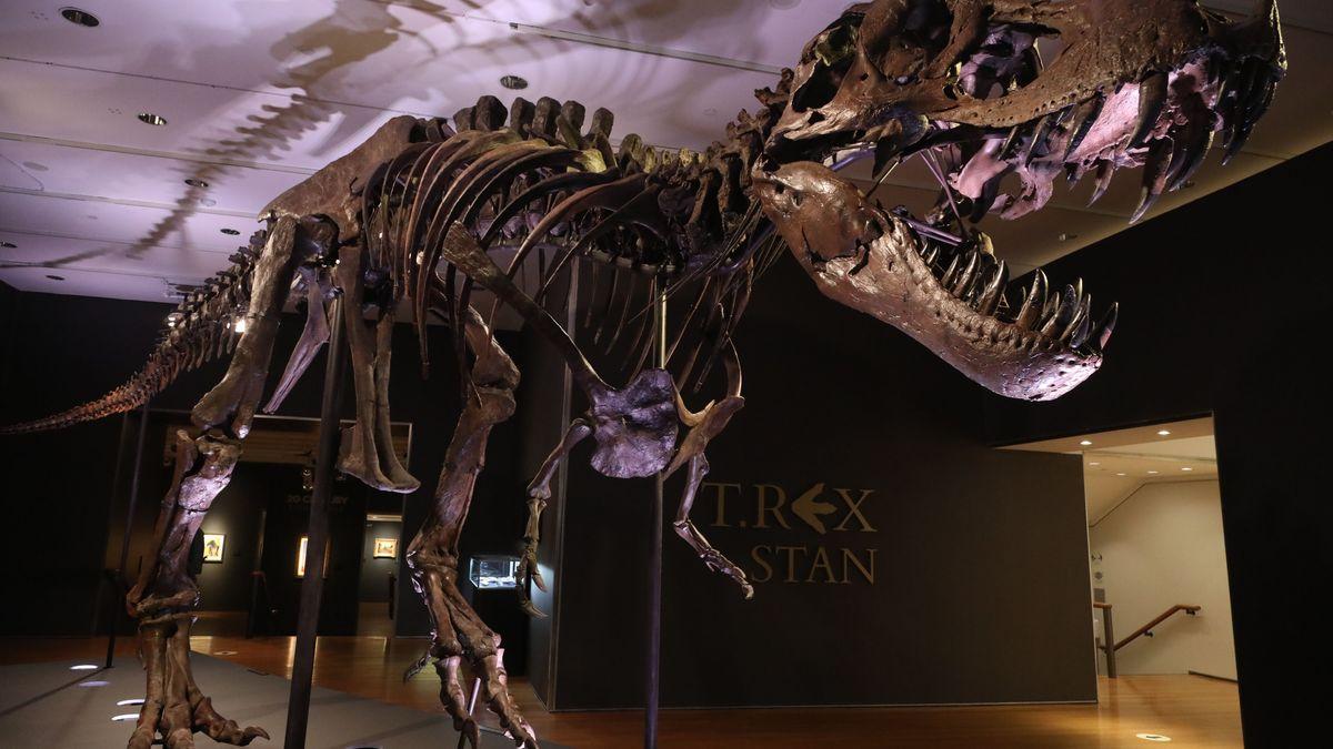 Tyrannosaurus-Skelett