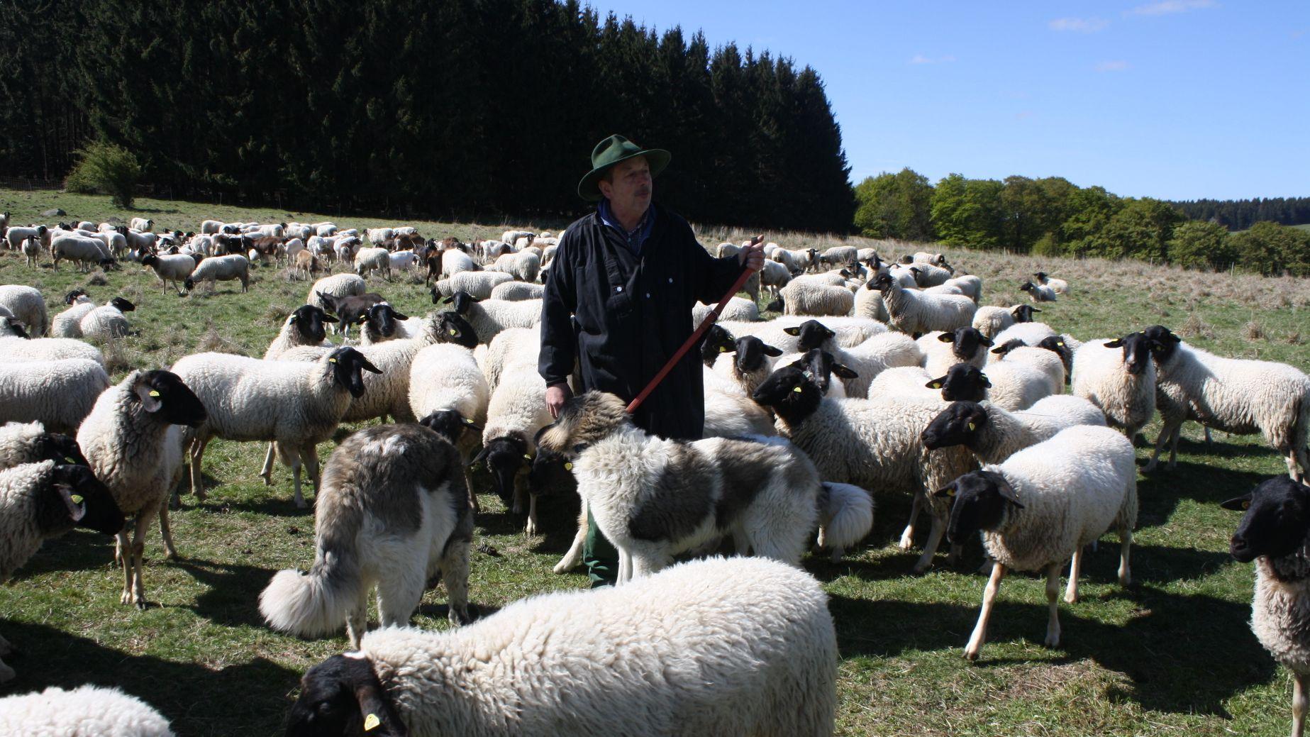 Rhönschäfer Josef Kolb rüstet sich gegen den Wolf