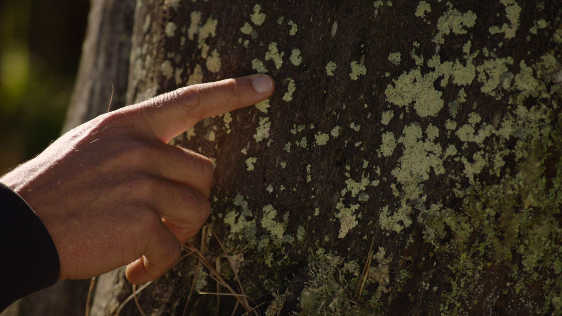 Flechten an einem Baumstamm im Nationalpark Bayerischer Wald