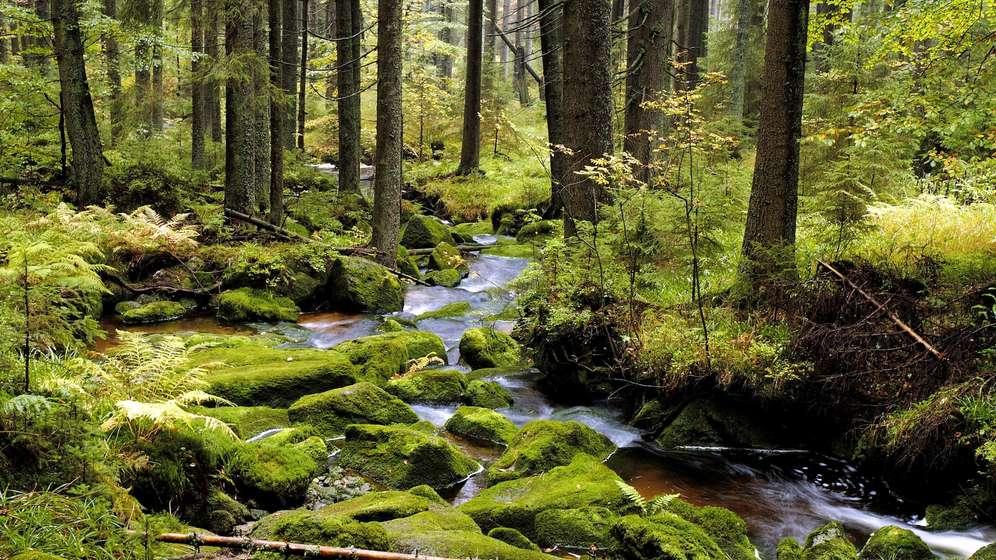 Nationalpark Bayerischer Wald (Symbolbild) | Bild:picture alliance / blickwinkel