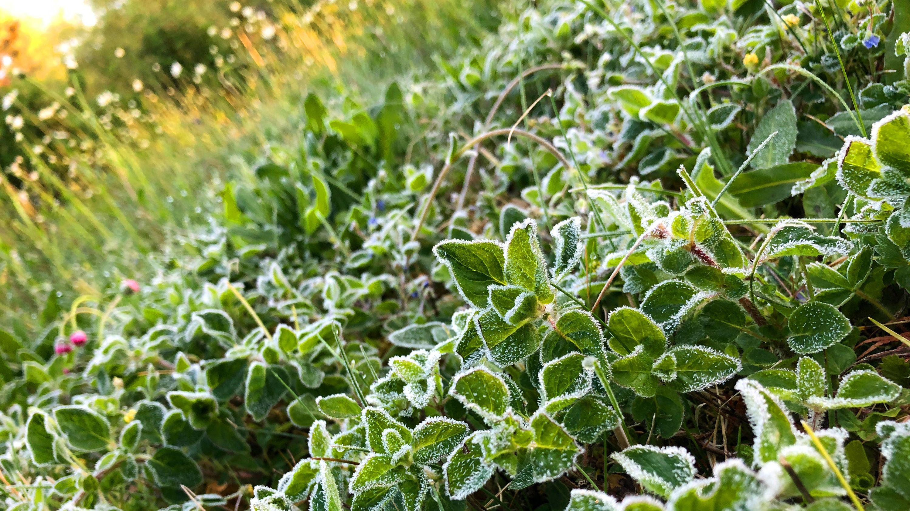 Mit Fost überzogen sind diese Pflanzen nach einer kalten Nacht in Bayern.
