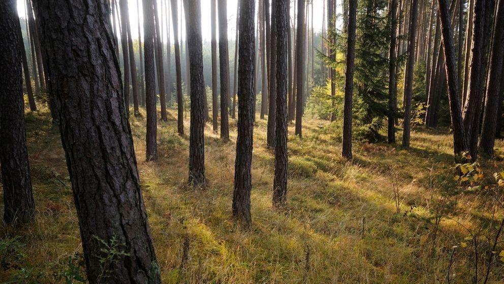 Ein Waldgebiet in Bayern (Symbolbild)