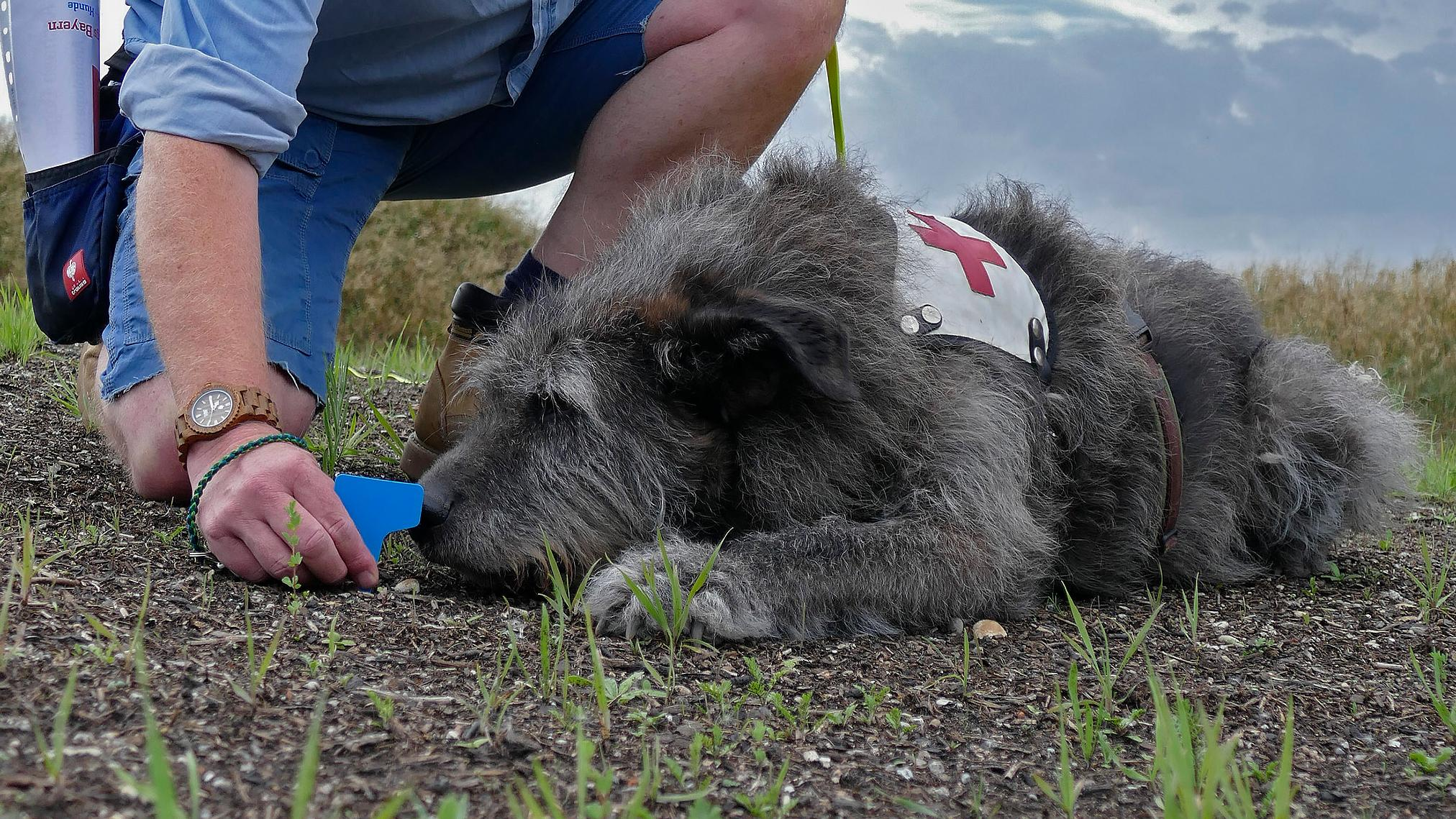 Archaeo-Dog Flinstone wird auf Suche vorbereitet