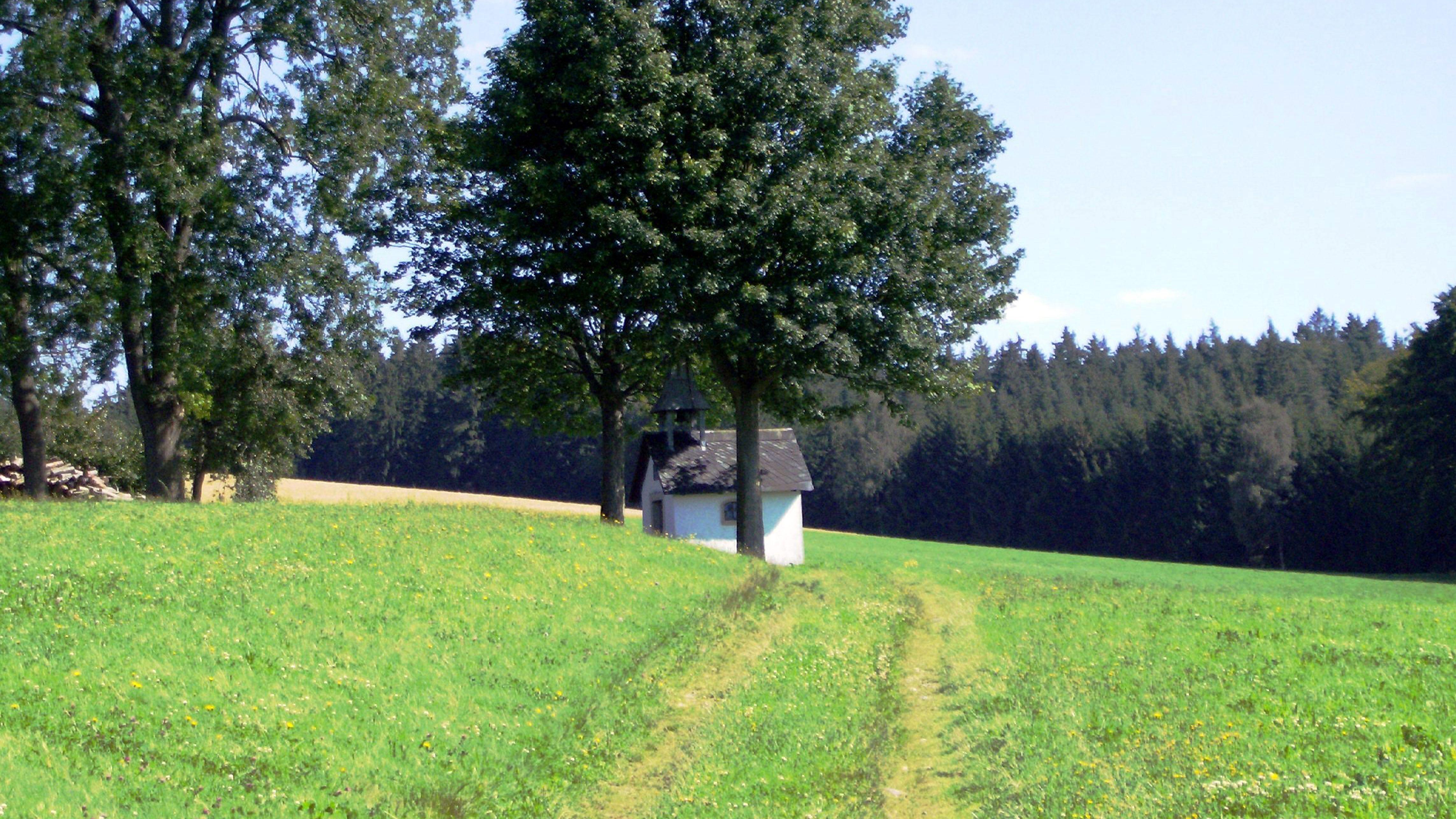 Ein Feldweg führt über eine Wiese zu einer kleinen Kapelle, die zwischen zwei Bäumen steht.