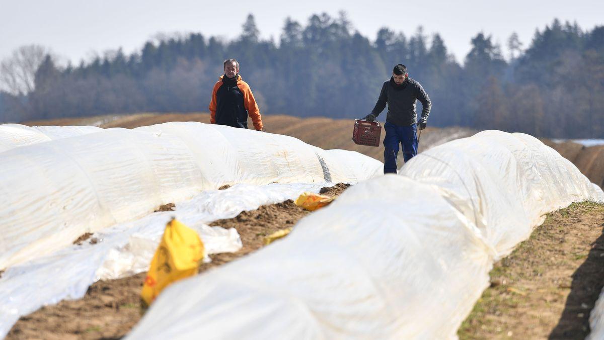 Saisonarbeiter auf einem Feld