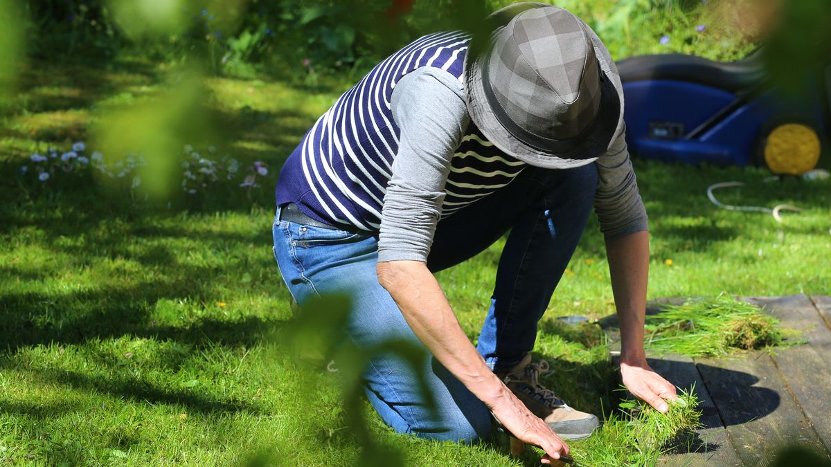 Rasenpflege im Sommer