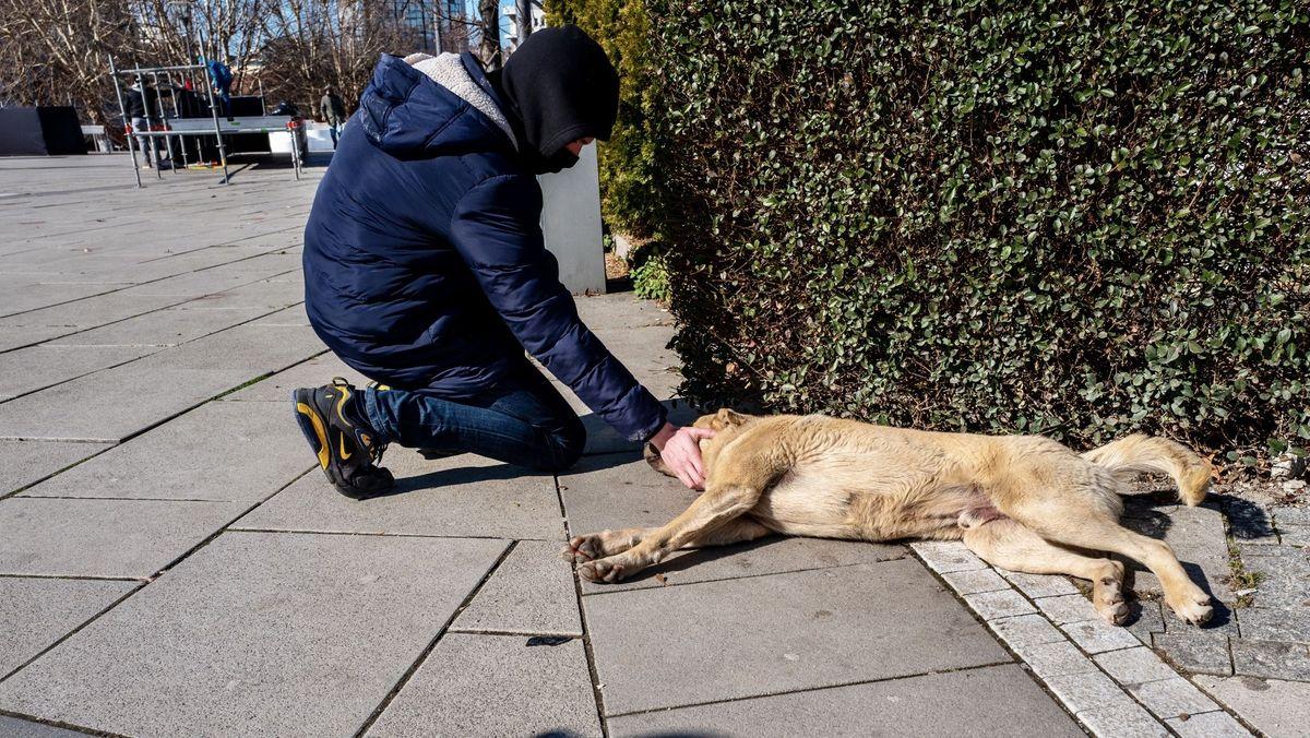 Das Bild zeigt einen Strassenhund, der von einem Retter gestreichelt wird