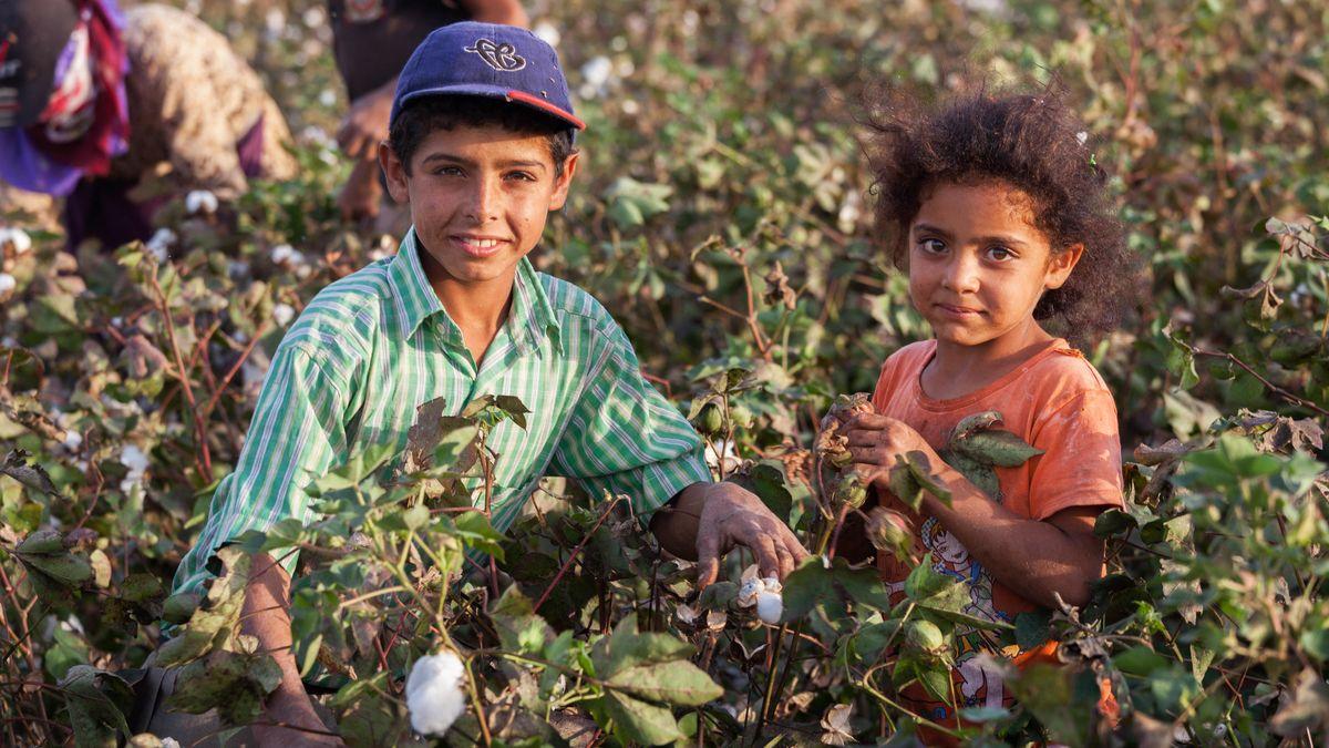 Ein Junge und eine Mädchen pflücken Baumwolle.