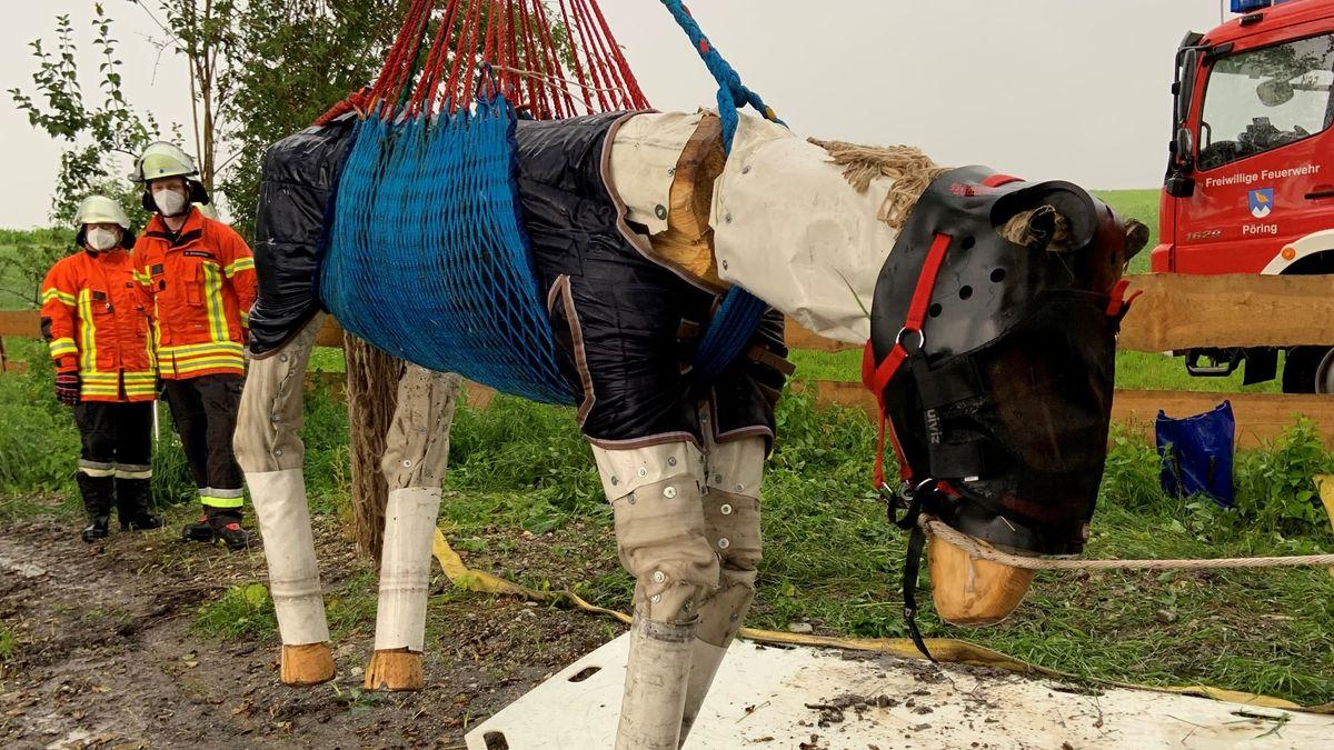 """Hängendes Holzübungspferd """"Woody"""""""