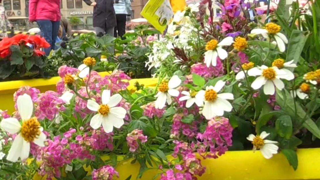 Gelbe Blumenkästen mit blühenden Blumen auf dem Hauptmarkt in Nürnberg
