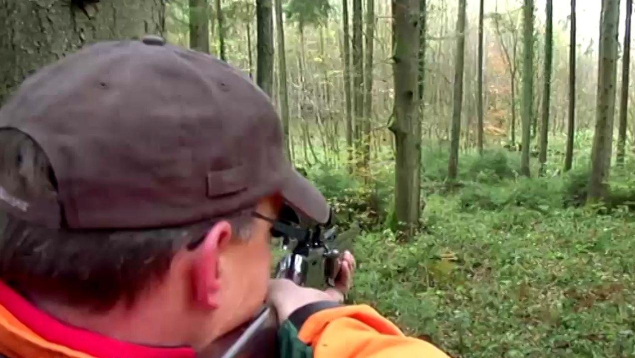 Ein Jäger zielt auf ein Wild im Waldgebiet des Würzburger Juliusspitals