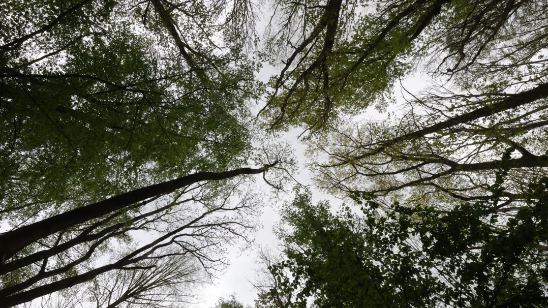 Vier Kommunen in Bayern bekommen die Waldprämie, mit der eine nachhaltige und verantwortungsvolle Waldbewirtschaftung unterstützt werden soll.