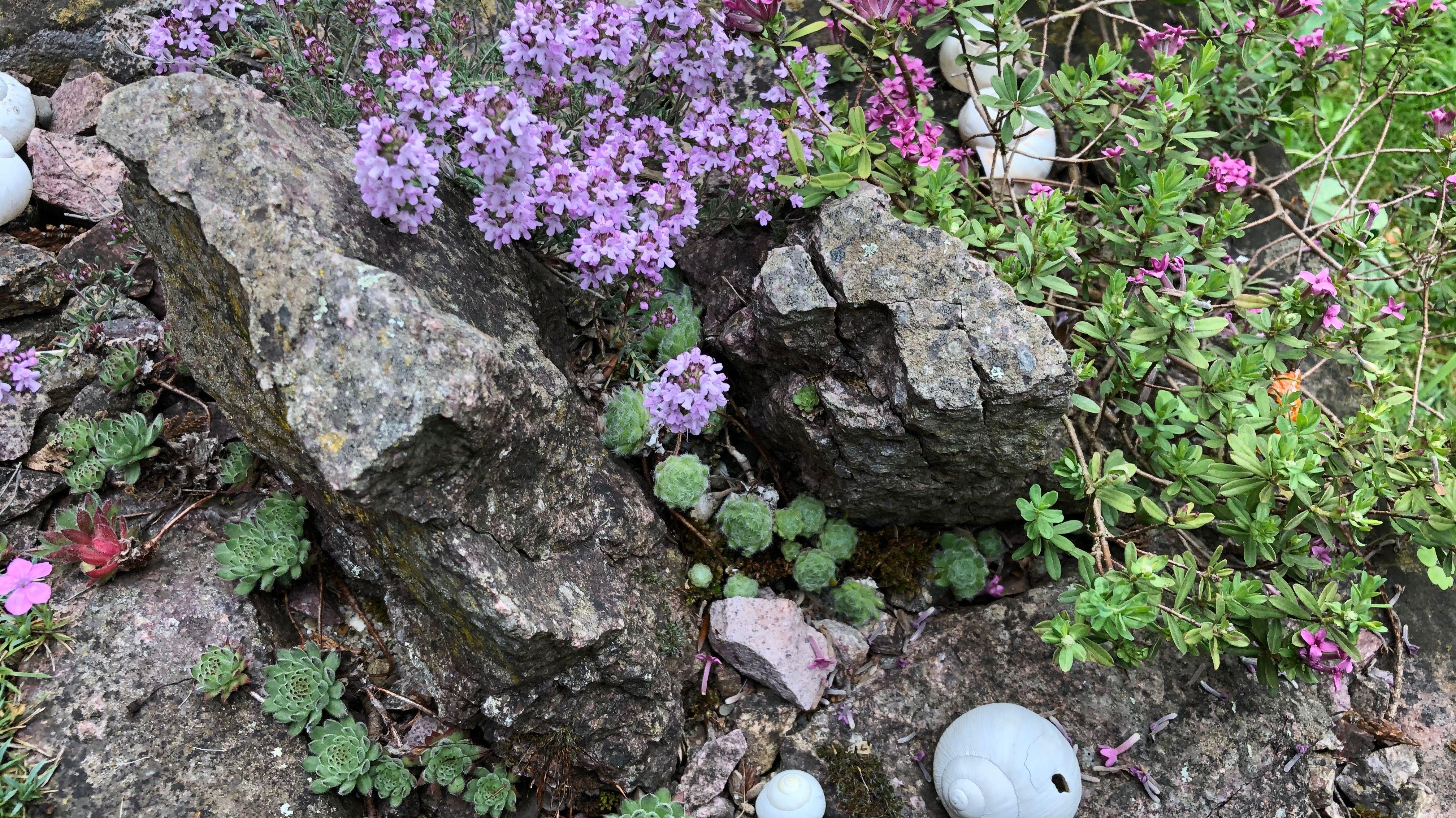 Steine mit Pflanzen bewachsen