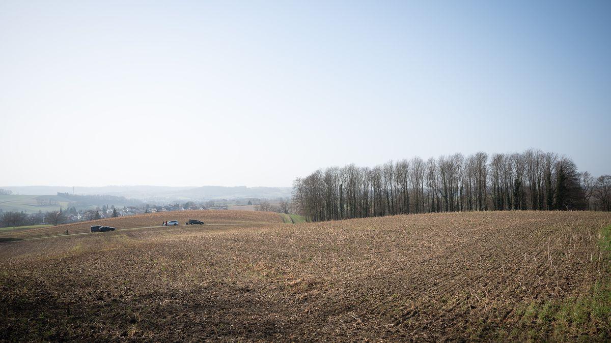Der mutmaßliche Tatort: Ein Waldstück in der Nähe von Sinsheim-Eschelbach. Hier wurde ein 13-jähriger Junge tot gefunden.