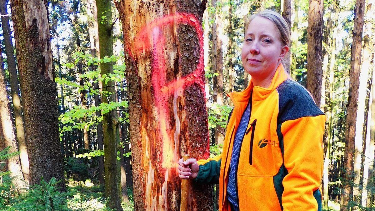 Försterin Claudia-Christin Krüger vom Forstbetrieb Bodenmais hat eine alte Käferleiche mit dem roten B markiert.