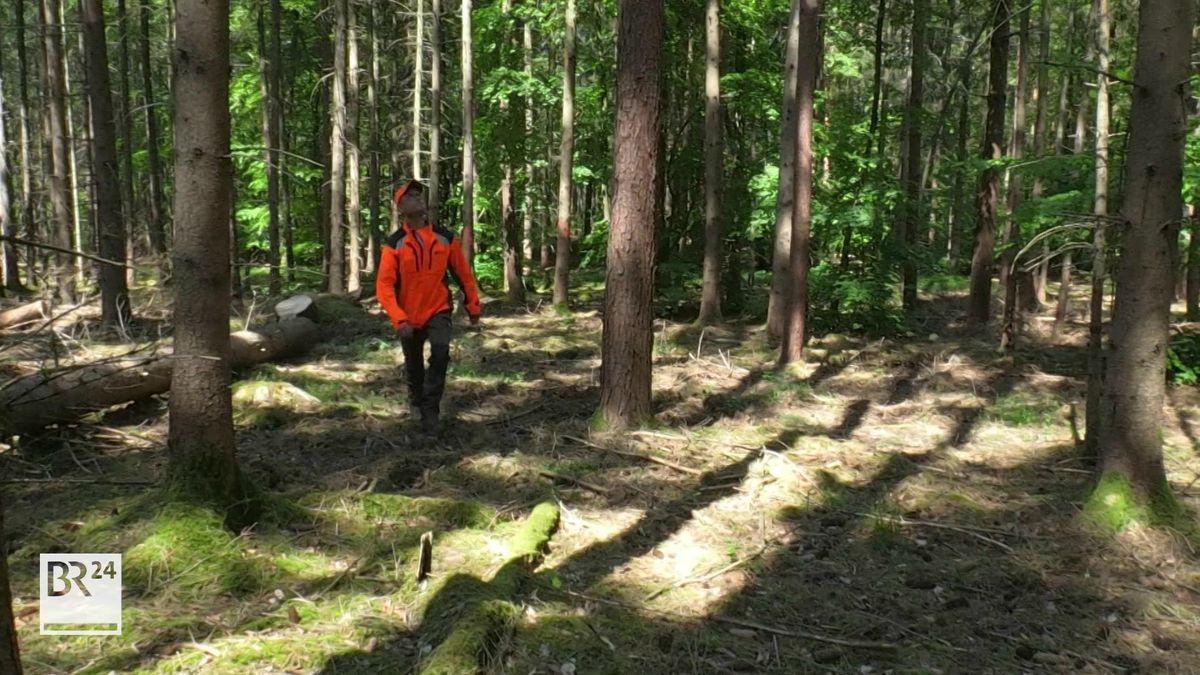 Ein Fortsbetriebsmitarbeiter läuft durch den Wald und begutachtet die Bäume.