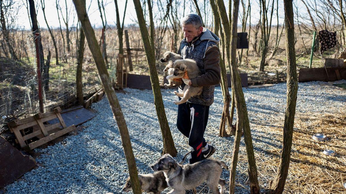 Das Bild zeigt einen Tierretter mit zwei Hundewelpen auf dem Arm