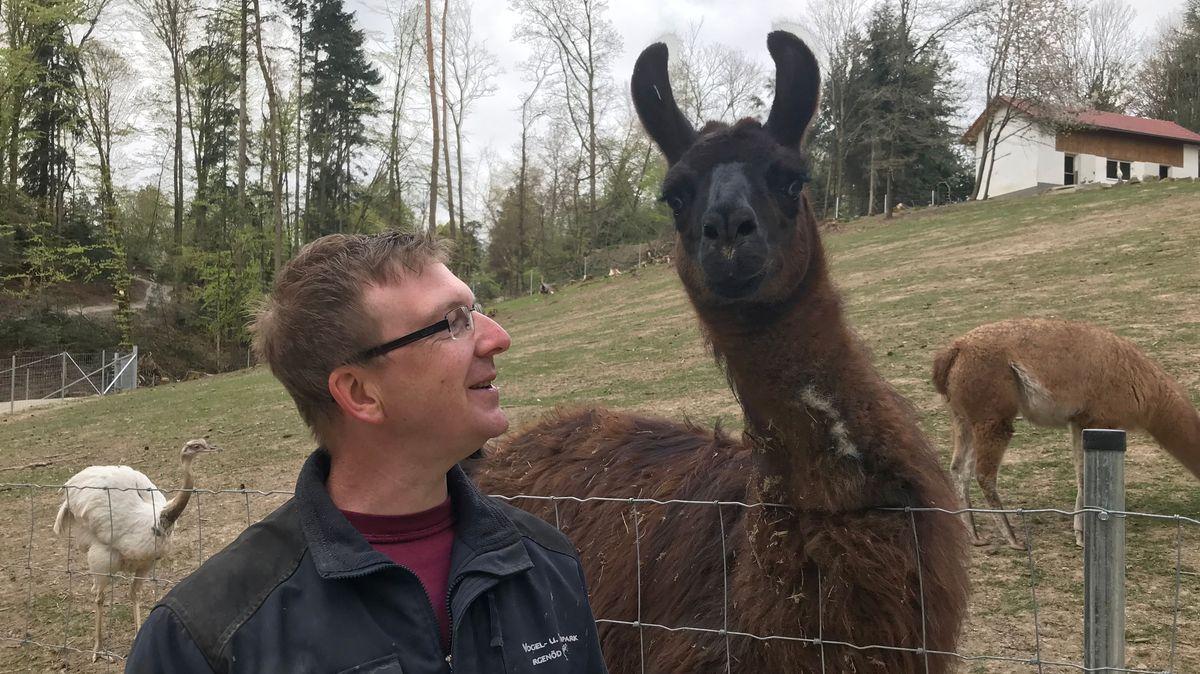 Frank Schobesberger und ein Lama im Wildpark