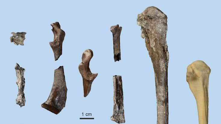 Fossilienfund im Allgäu