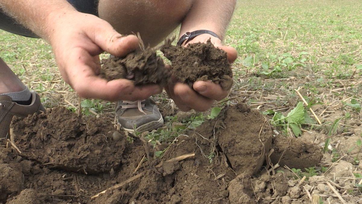Bauer hält Erde in der Hand