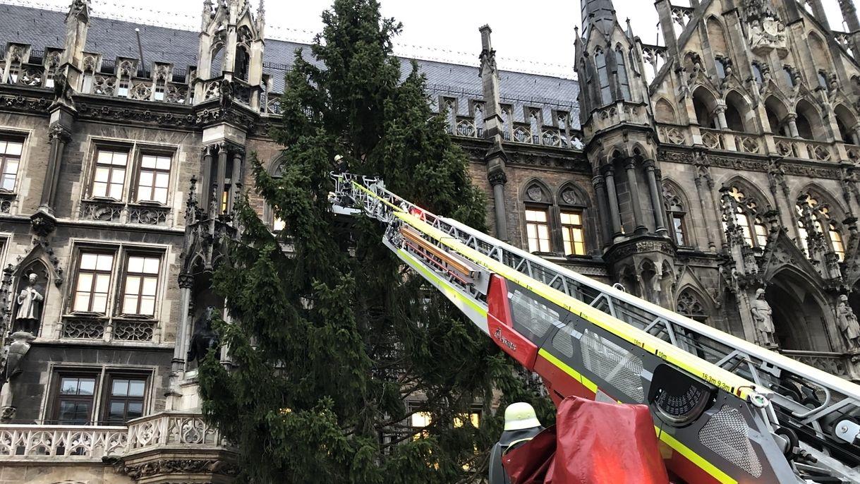 Aufstellen des Christbaums auf dem Marienplatz 2019