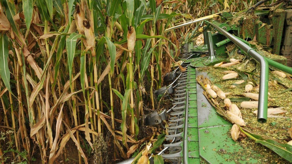 Unterfränkische Bauern starten früher mit Silomais-Ernte