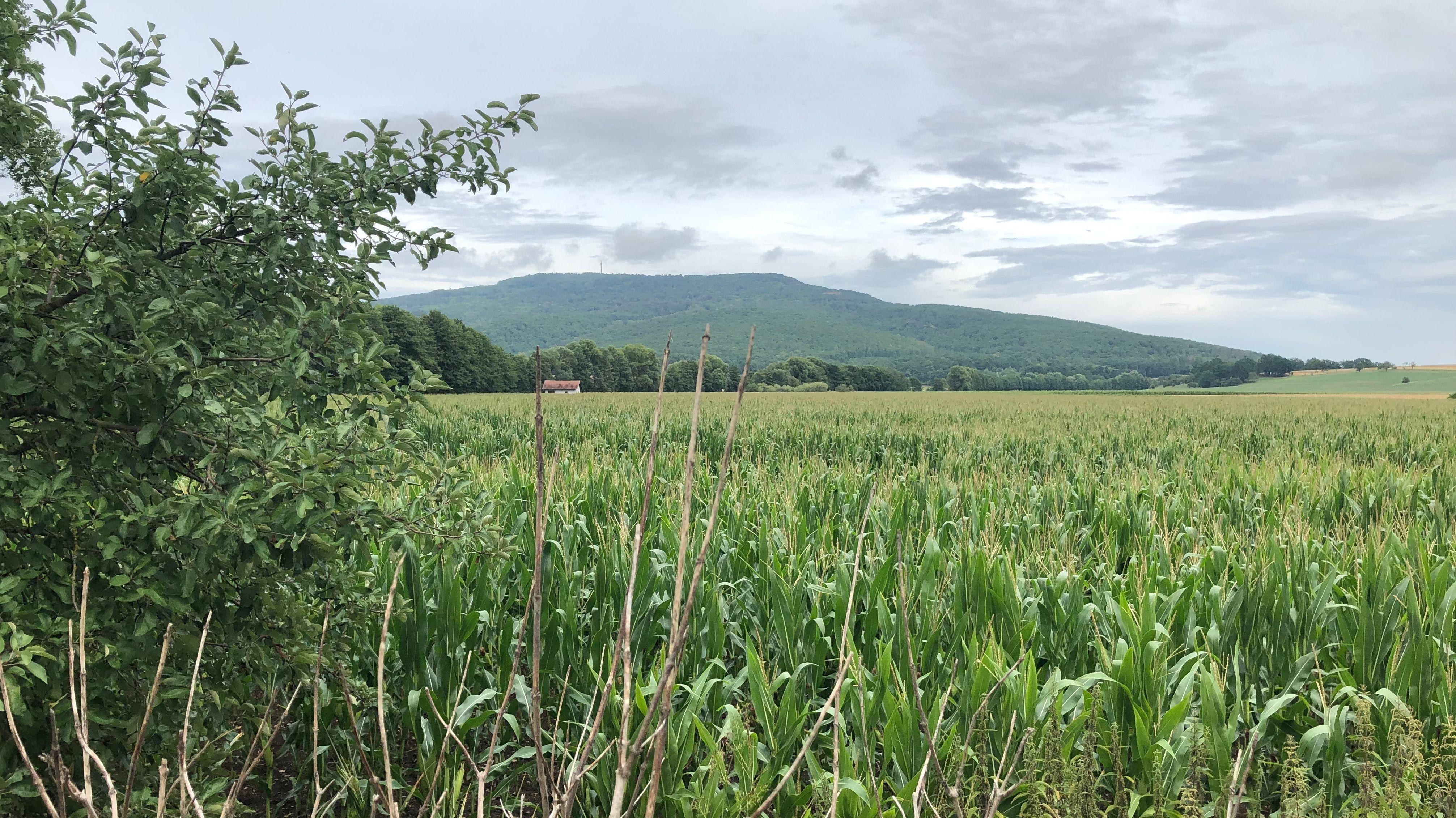 Ein Feld im Grabfeld in Unterfranken.
