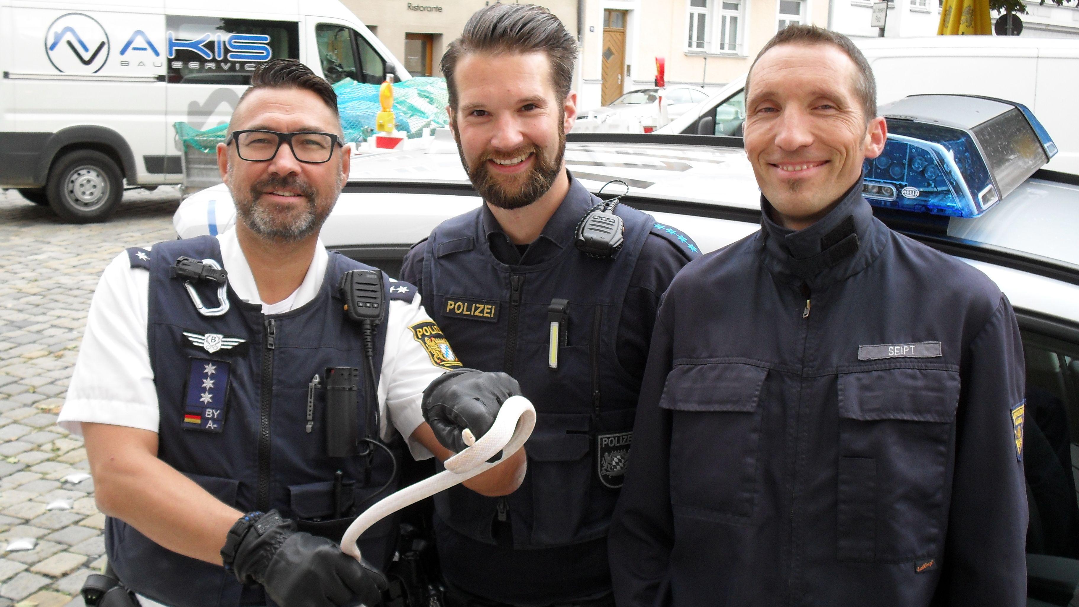 Drei Augsburger Polizisten, einer hält die Schlange, einer Albino Kornnater in der Hand - er trägt Handschuhe