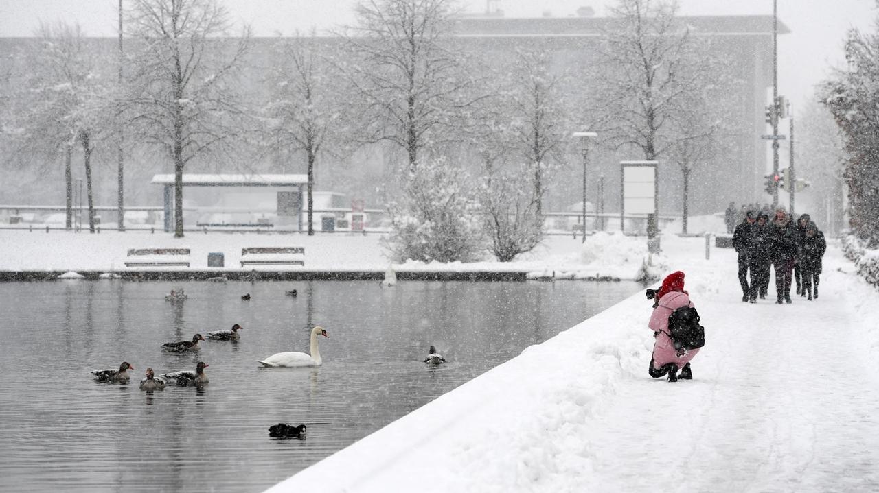 Wetterimpressionen: Eine Frau fotografiert bei Schneefall Enten und einen Schwan am Messesee in München.