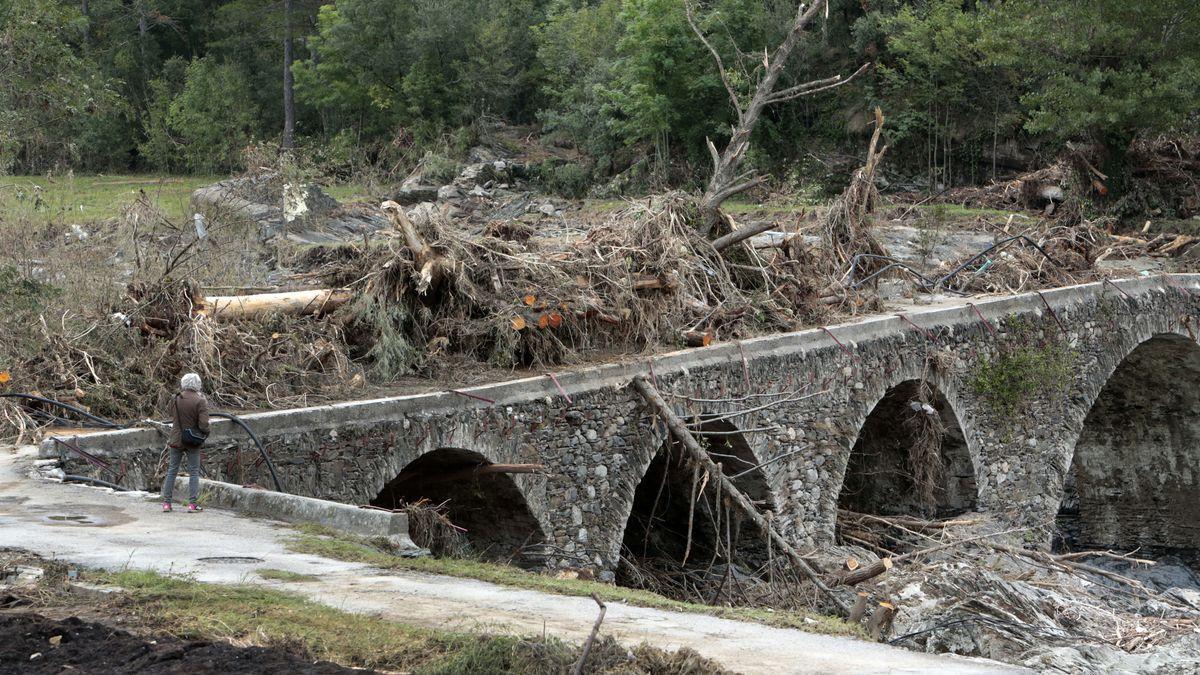 Umgestürzte Bäume auf Brücke.