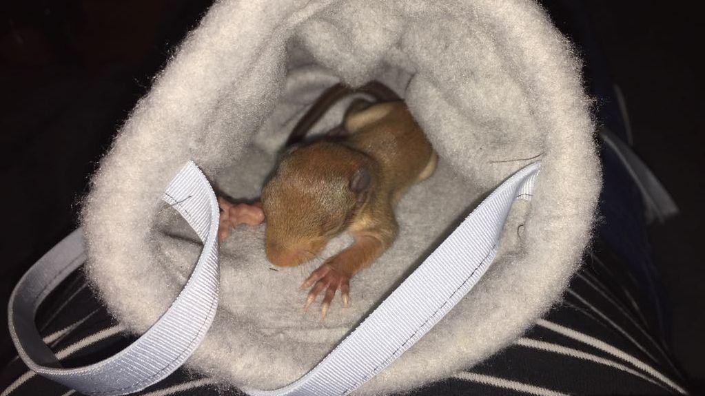 Verwaiste Eichhörnchen-Kinder: Aufwändige Aufzucht