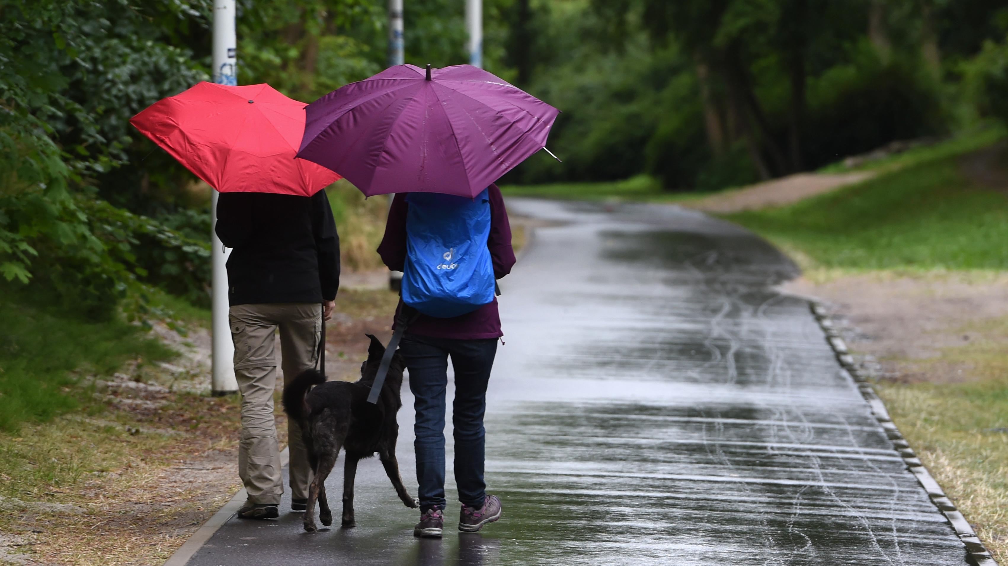 Spaziergänger mit einem Hund und Regenschirmen