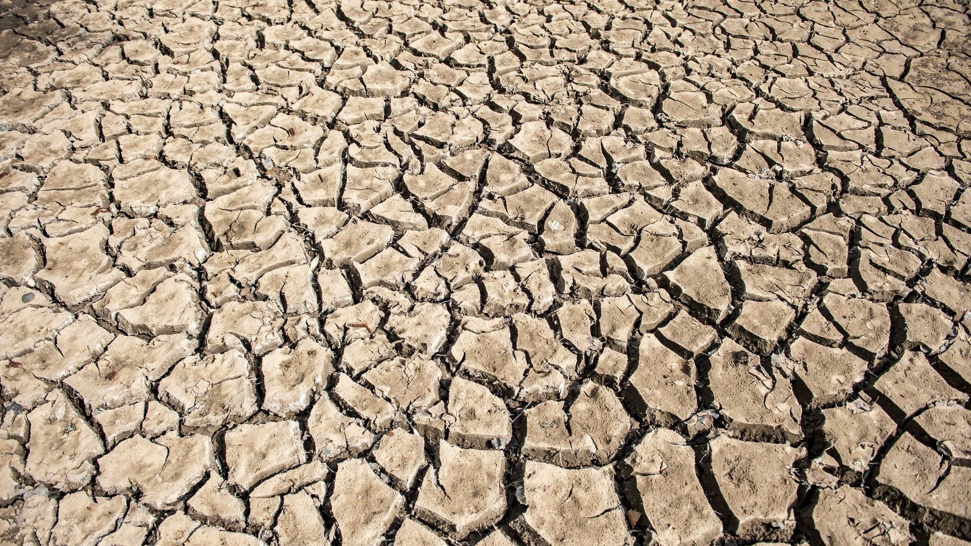 Risse in einen ausgetrockneten Boden.