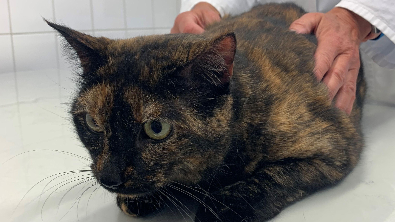 Eine Katze kauert auf einem Behandlungstisch.