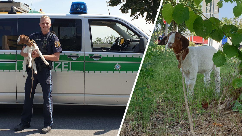 Polizei rettet Ziege von Autobahnraststätte in Unterfranken