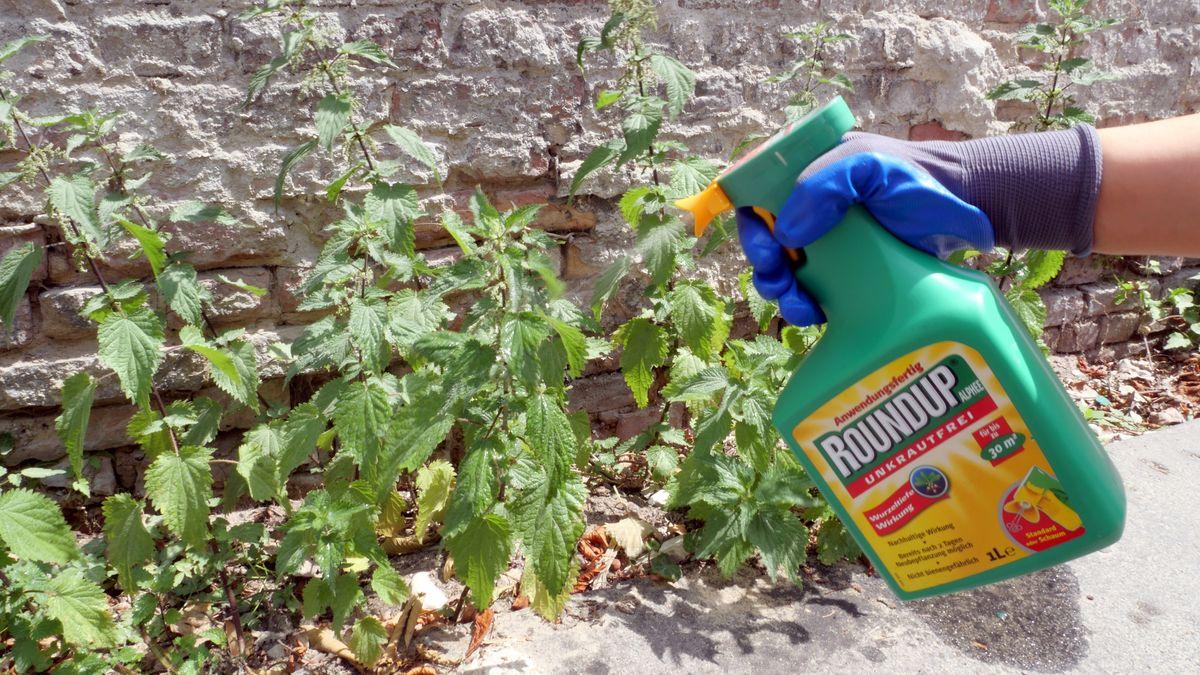 Das Unkrautvernichtungsmittel Roundup vom Chemiekonzern Monsanto (Bayer AG) mit dem Wirkstoff Glyphosat