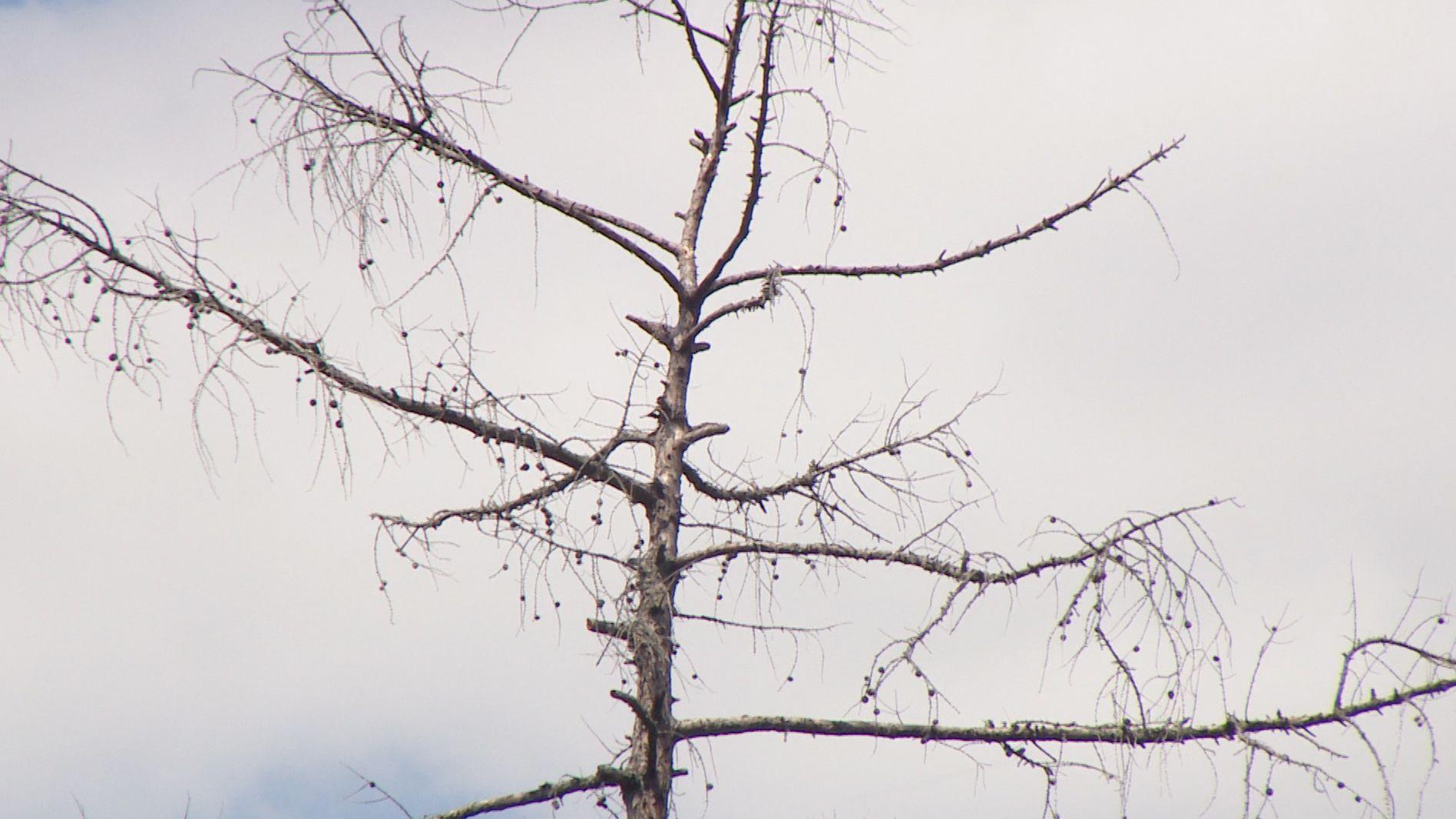Toter Baum im Würzburger Steinbachtal