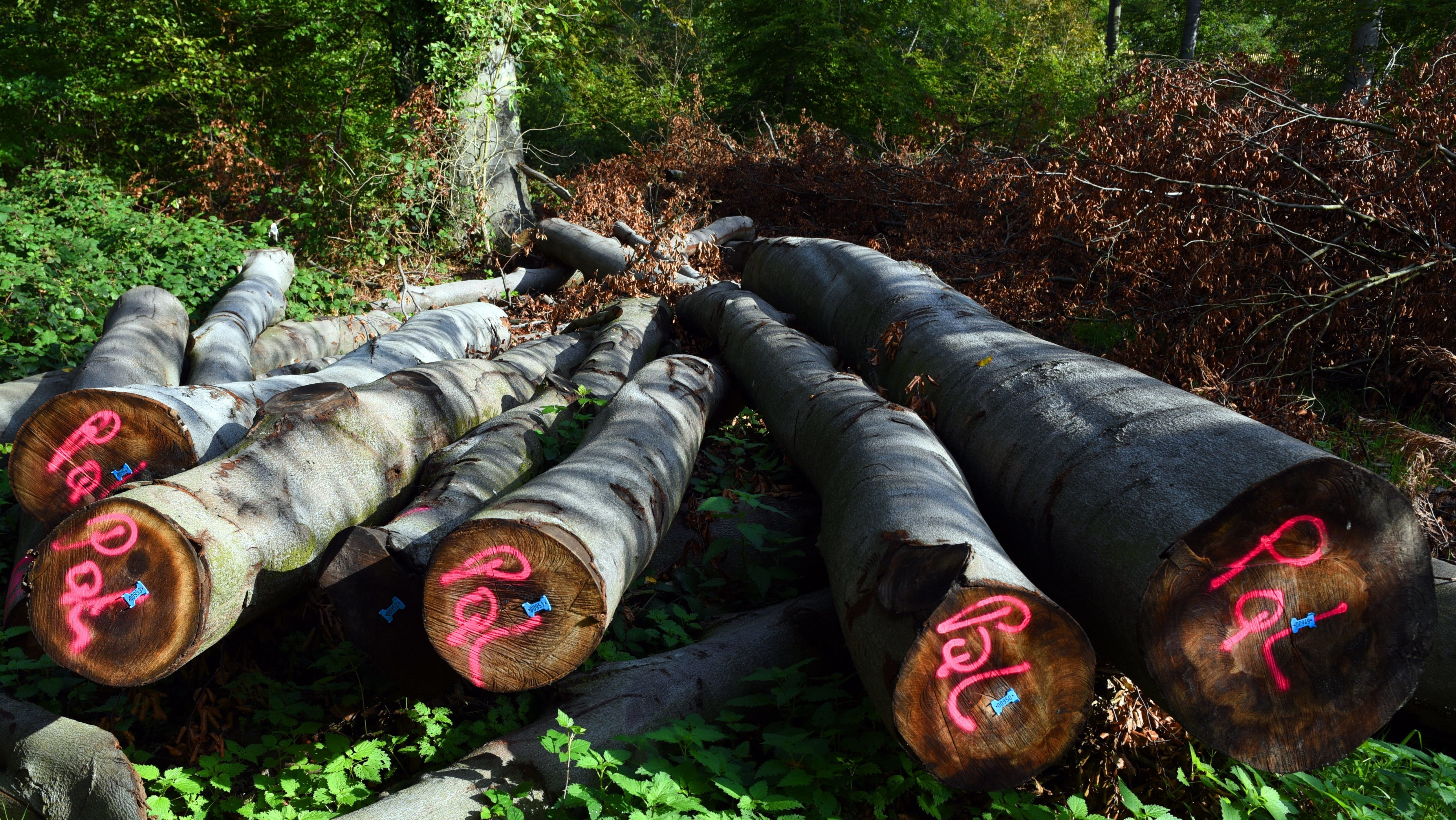 Staatspreis für vorbildliche Waldbewirtschaftung