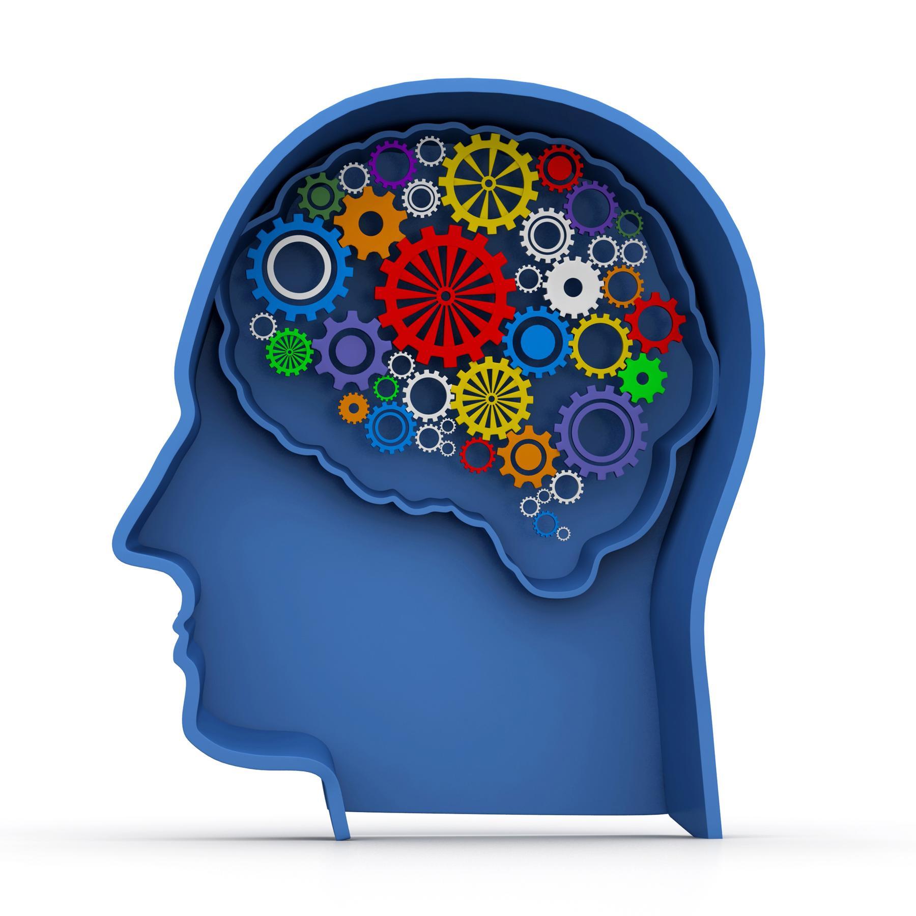 Neuroplastizität - Wie das Gehirn sich neu strukturiert